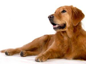 chacoペットシッター お世話の内容 犬の場合