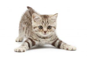 chacoペットシッター お世話の内容 猫の場合