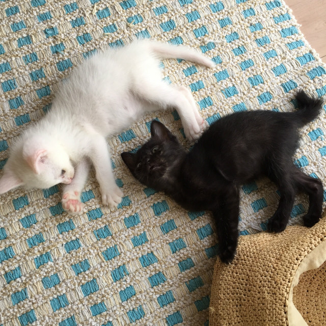 大田区周辺の猫のお世話はキャットシッター・モジョにお任せ下さい。