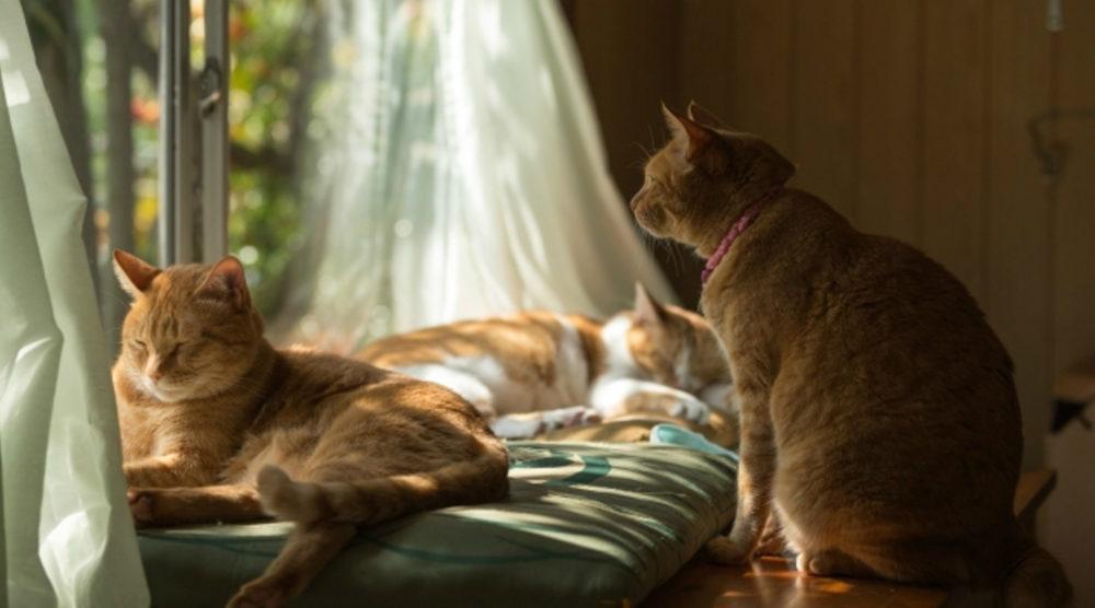 大田区・田園調布を中心とした猫専門ペットシッターです