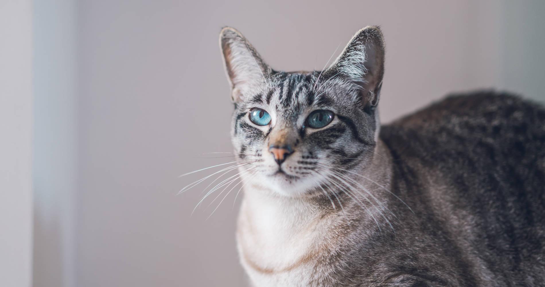 猫専門ペットシッター