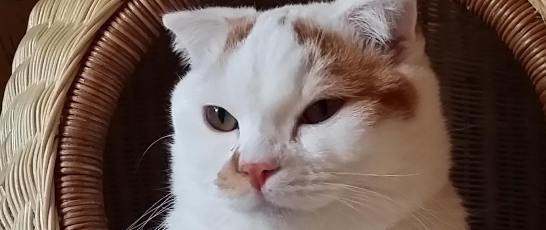 新宿区の猫のペットシッター