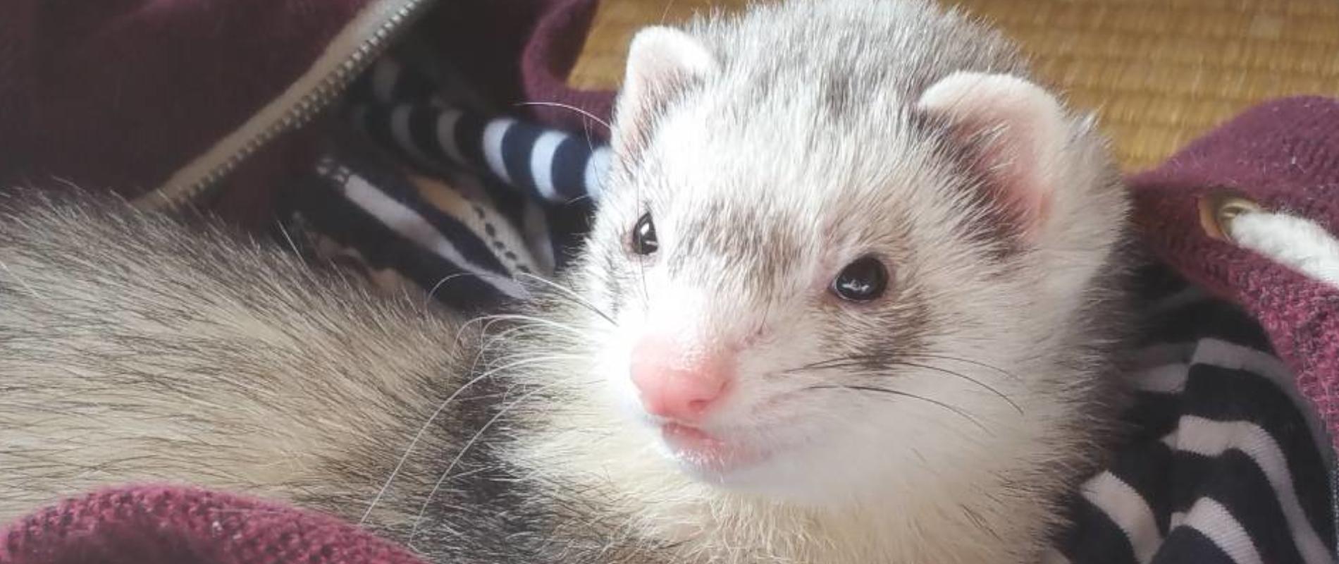 新宿区の小動物のペットシッター