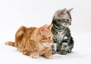 藤枝市 焼津市 ペットシッター 散歩代行 ペット介護 猫の場合