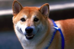 藤枝市 焼津市 ペットシッター 散歩代行 ペット介護 犬の場合