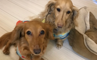 千代田区のペットシッターPawMateのお世話内容、犬の場合
