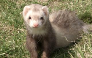 千代田区のペットシッターPawMateのお世話内容、小動物の場合