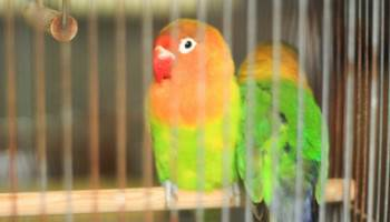 鳥のペットシッターイメージ