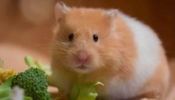 小動物のペットシッターイメージ