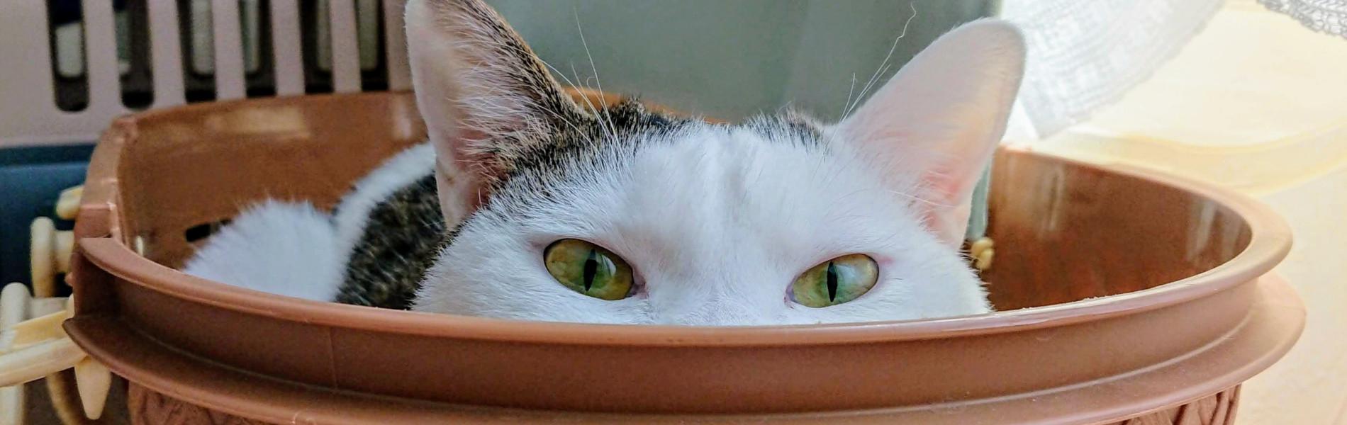 朝霞市の猫のペットシッター