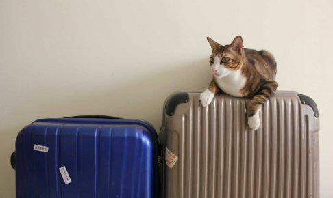 お留守番、ペットホテルが苦手 分離不安なペットのケアはどうするべき?