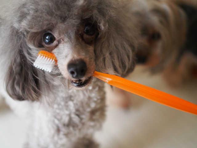 予防には歯磨きが一番