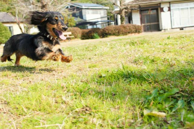 若い犬、作業意欲の高い犬、エネルギーを持て余している犬にはたっぷりのお散歩を!