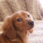 犬の下痢で考えられる病気。便は健康のバロメーター