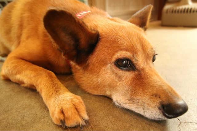 犬 下痢 考えられる病気