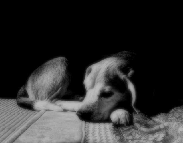 長時間の留守番が難しい仔犬や老犬のお世話