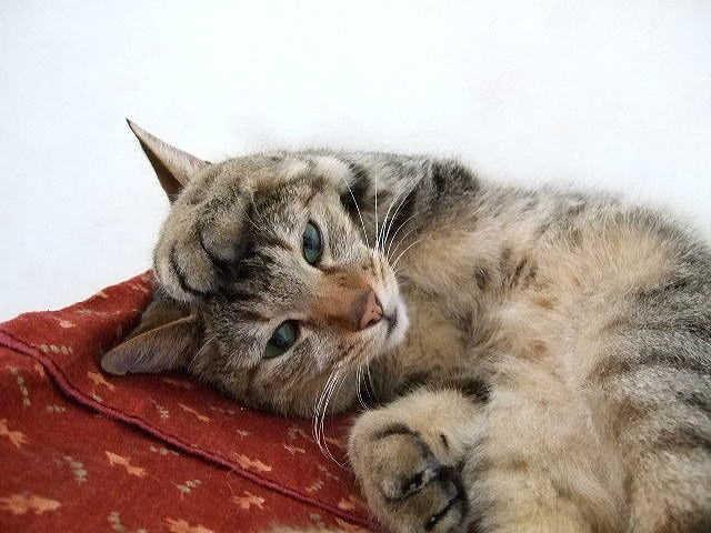 猫 痙攣 主な病気