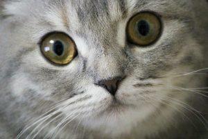 猫の涙・目ヤニが多い~ほうっておいて大丈夫?