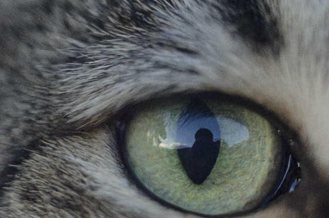 猫の涙の成分