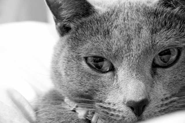 猫の目ヤニの色と症状