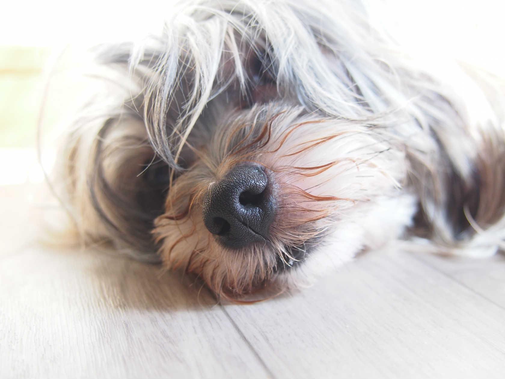 激しい嘔吐が止まらない!犬にも起こる膵炎について