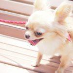 ケンネルコフの症状、治療、予防方法は?子犬や老犬の咳に注意