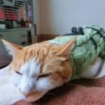 猫の鼻がぐずぐず…これって猫風邪?原因、症状、治療方法は?