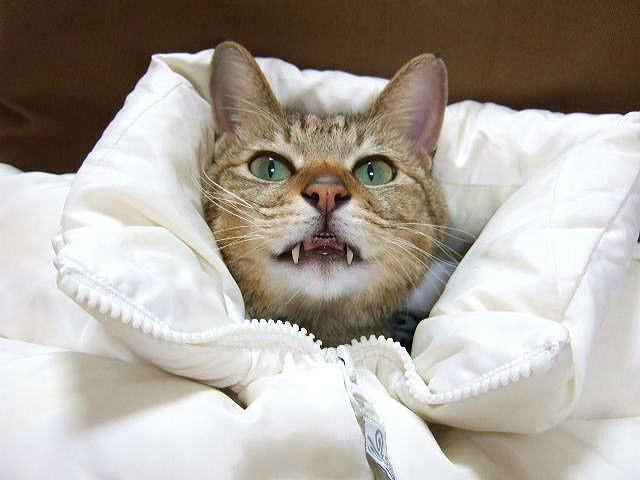 そもそも猫風邪って?