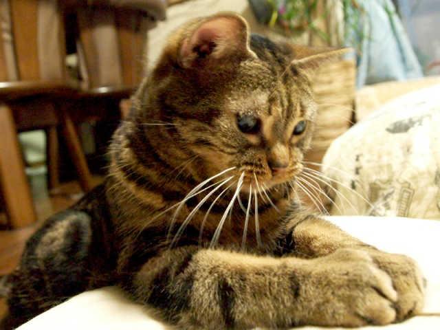 猫 膀胱炎 原因