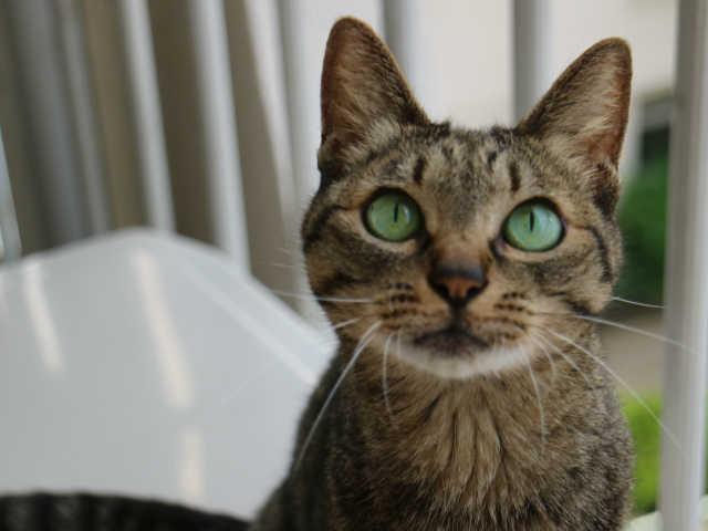 猫 膀胱炎 気をつける点