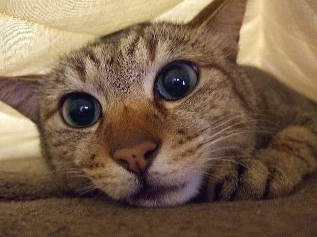猫の膀胱炎とは?