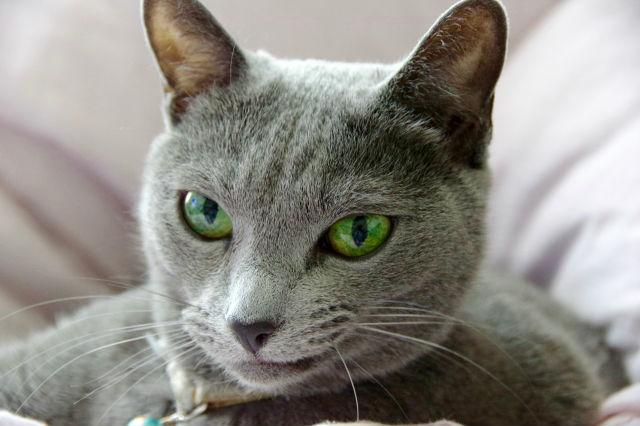 猫の結膜炎