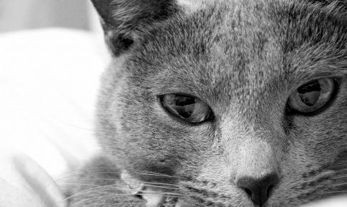 目は健康のバロメーター~猫の目の病気~
