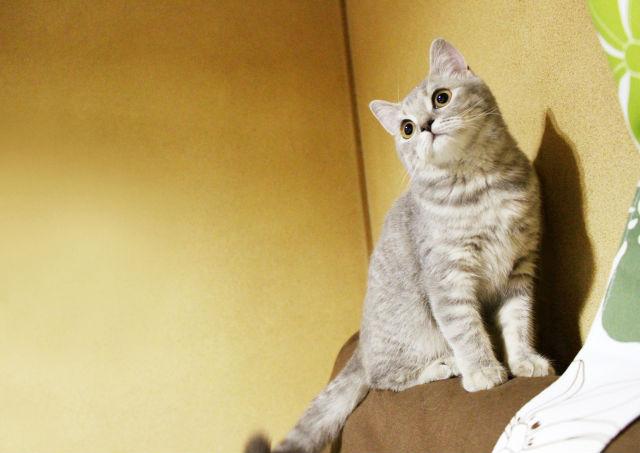 猫の角膜炎・角膜潰瘍