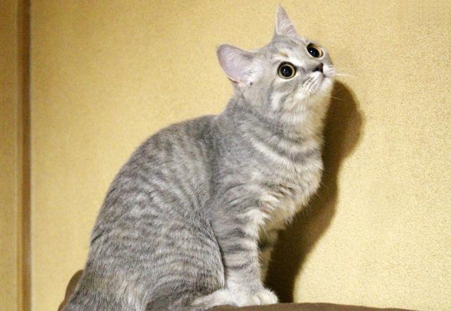 猫の流涙症