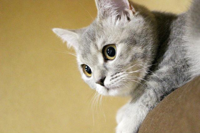 猫の網膜萎縮