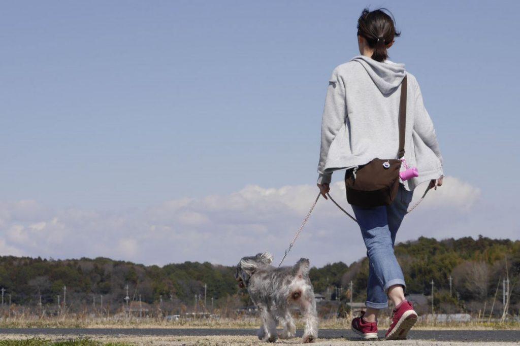 ペットシッター 散歩 散歩代行