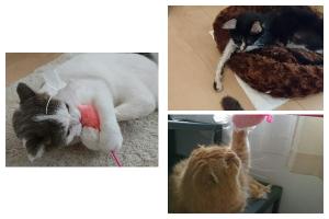 【猫のペットシッター】一多君、みやこくん、よつばちゃんのご家族から