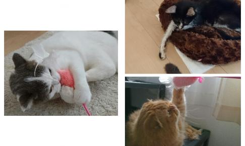 ペットシッター キャットシッター 猫 評判 口コミ お客様の声