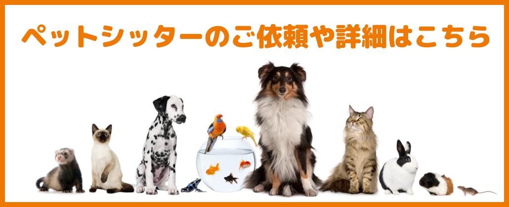ペットシッター、キャットシッター、散歩代行、ペット介護のご依頼や詳細はこちら