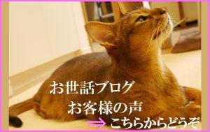 豊洲 辰巳 東雲 キャットシッター ペットシッター ゆるねこ ブログ、お客様の声